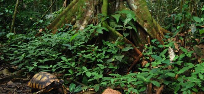 Ecología política del giro biocéntrico en Ecuador