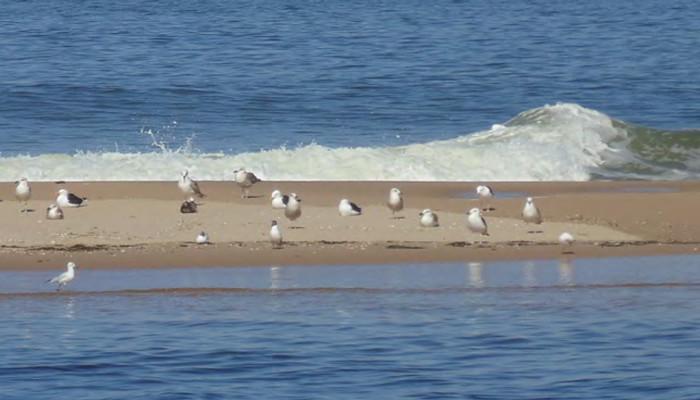 aves1